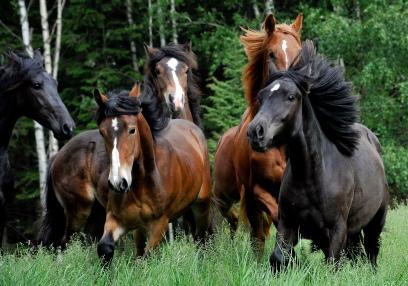 Hesteslippet, Trond Thorvaldsen