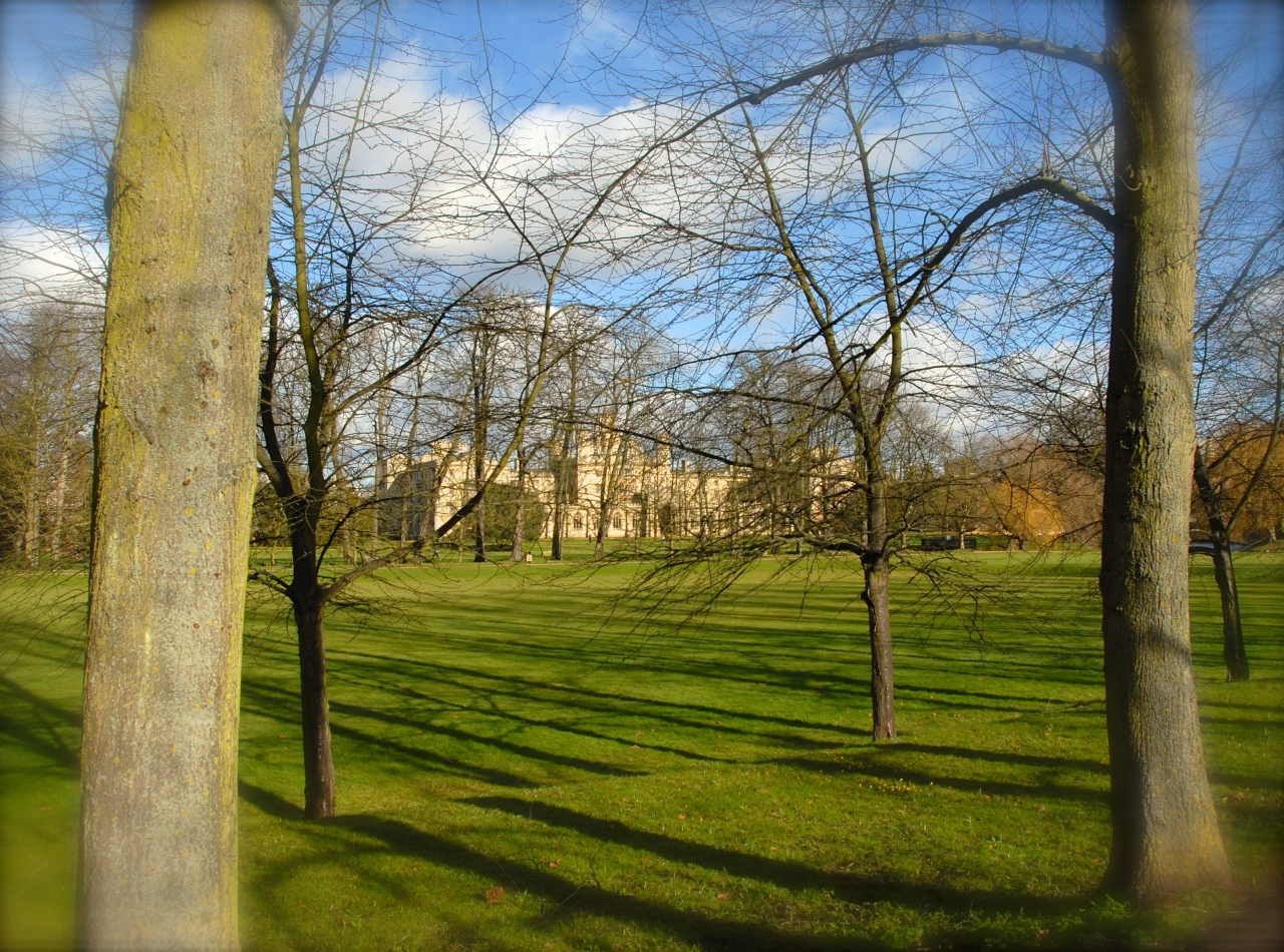 The green on the Backs, looking at St. John's College