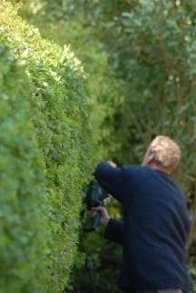 Klausbernd Vollmar bei Hecke schneiden, Rhu Sila, Cley, Norfolk Photo: Hanne Siebers