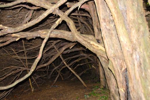 Inside the hedge of Blickling estate, Norfolk Photo: Hanne Siebers
