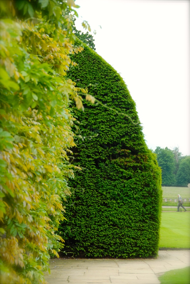 Hedge around Blickling Estate, Norfolk Photo: Hanne Siebers