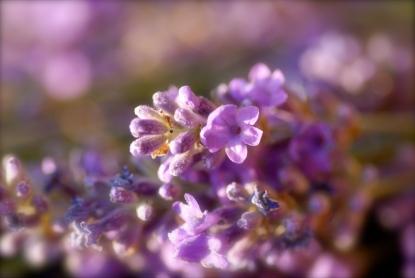 Rhu Sila Garden, Cley, Norfolk Photo: Hanne Siebers