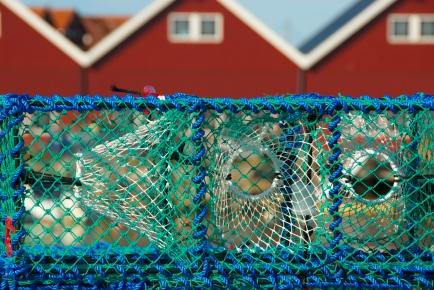 DSC_0060 Hvaler, Norway, Foto: Hanne Siebers