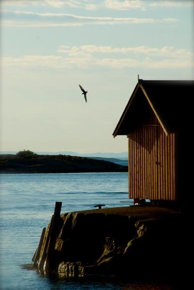 DSC_0066 Papperhavn, Hvaler, Norway Foto: Hanne Siebers