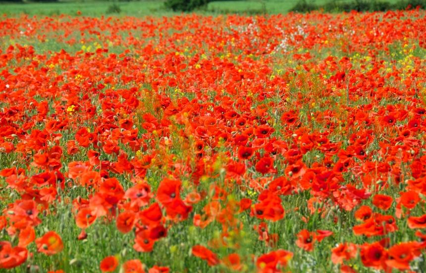 DSC_0068, Poppyland Norfolk, Foto: Hanne Siebers