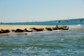 DSC_0071 seals at Blakeney point, Norfolk Foto: Hanne Siebers