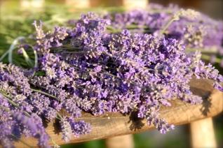 Lavendel2 002, Norfolk, Foto: Hanne Siebers
