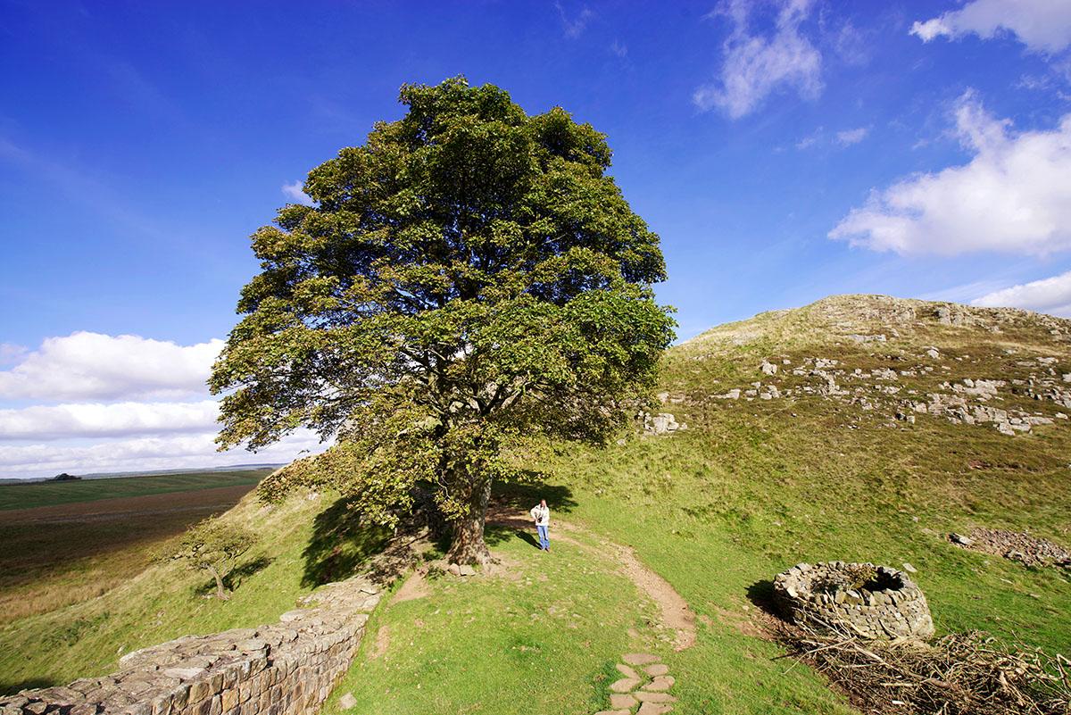 Sycamore Gap, Robin Hood's Tree, Hadrian's Wall, Foror: Ha_nne SiebersDSC_0421_kl