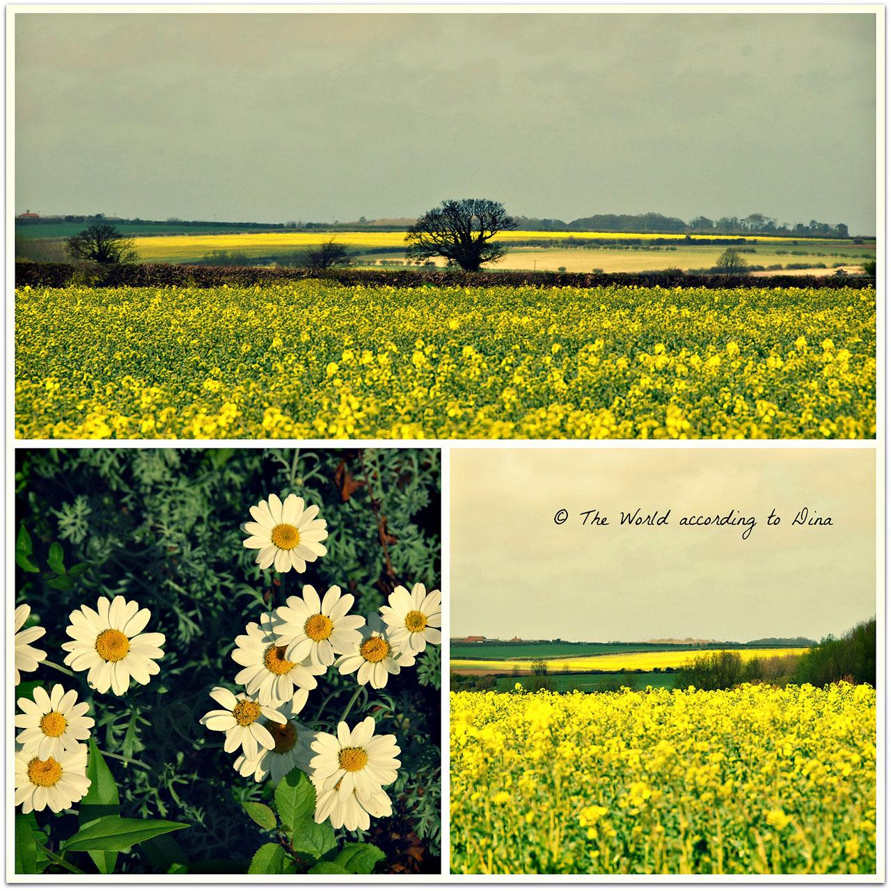 Hanne Siebers_Collage_yellow_RT_klein