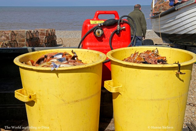 Crab10_klein