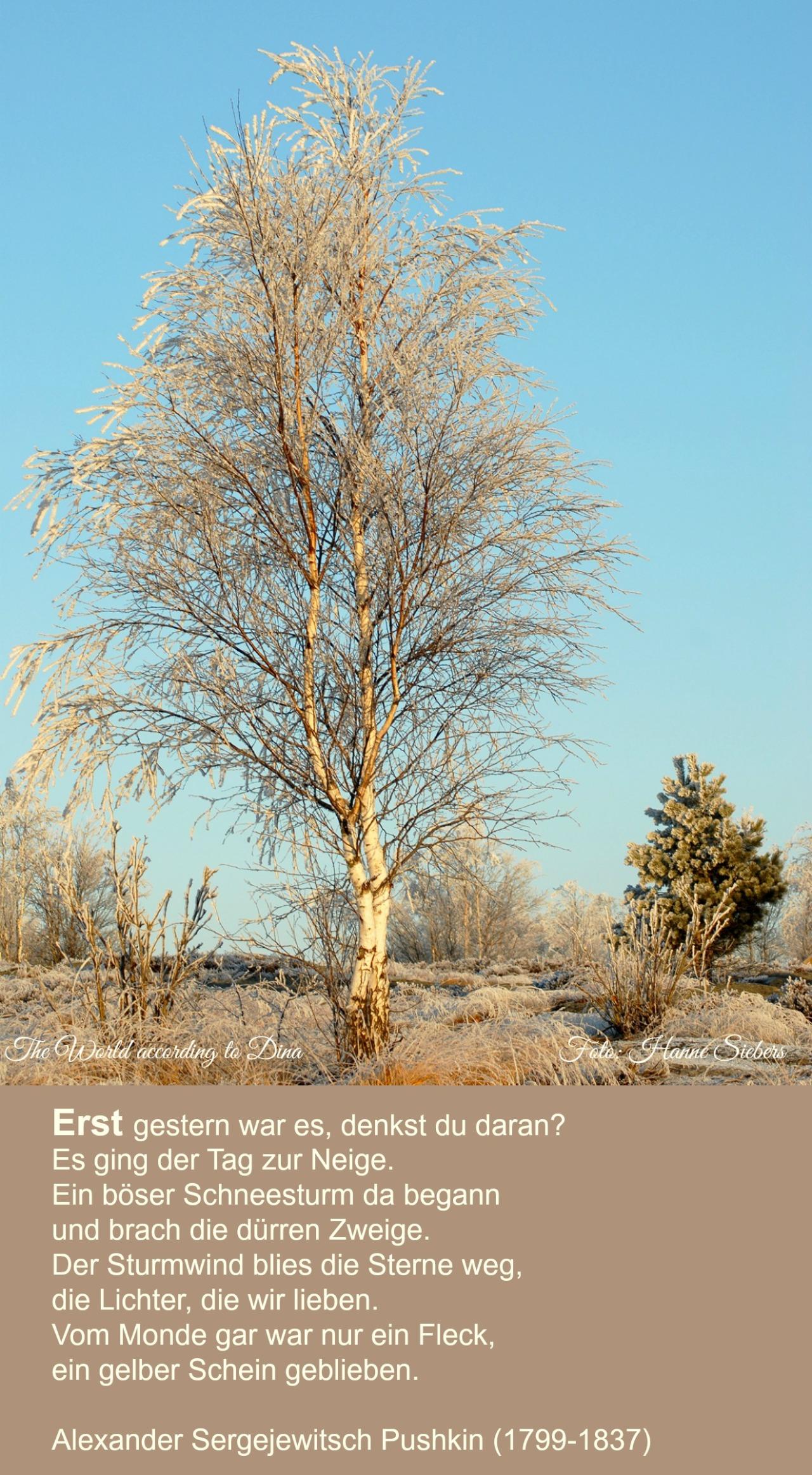 Winter_Fredrikstad
