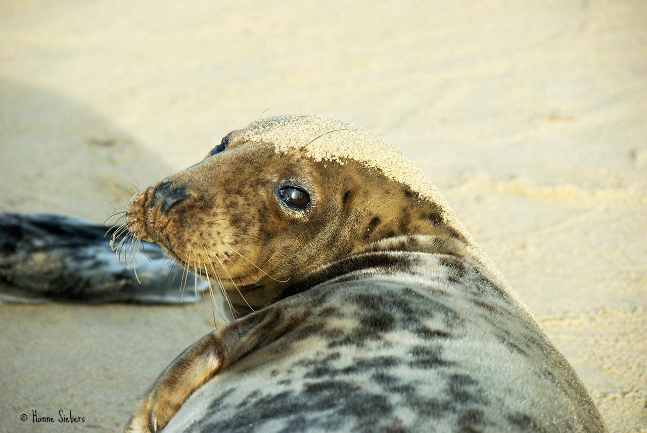 Seals02b