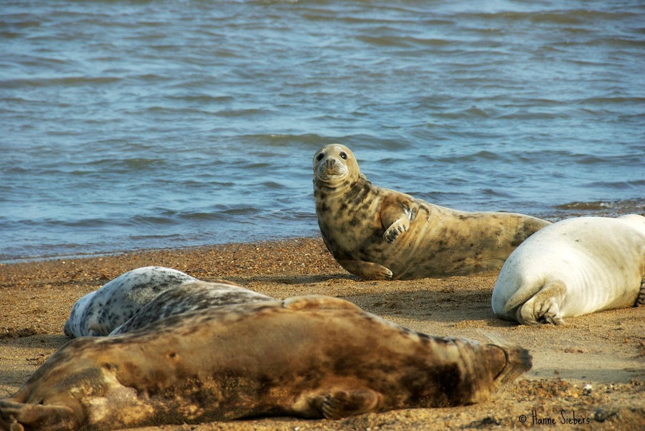 Seals10a