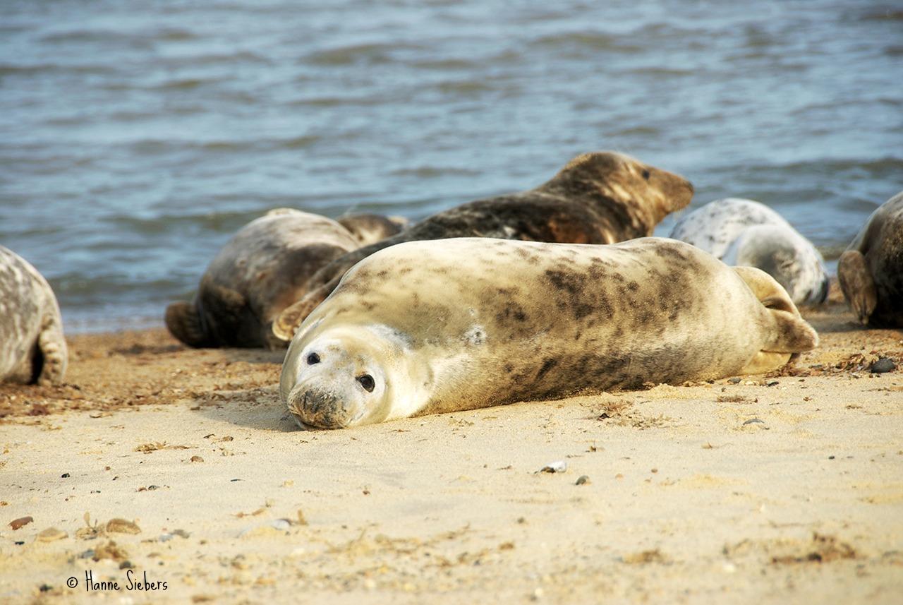 Seals29a