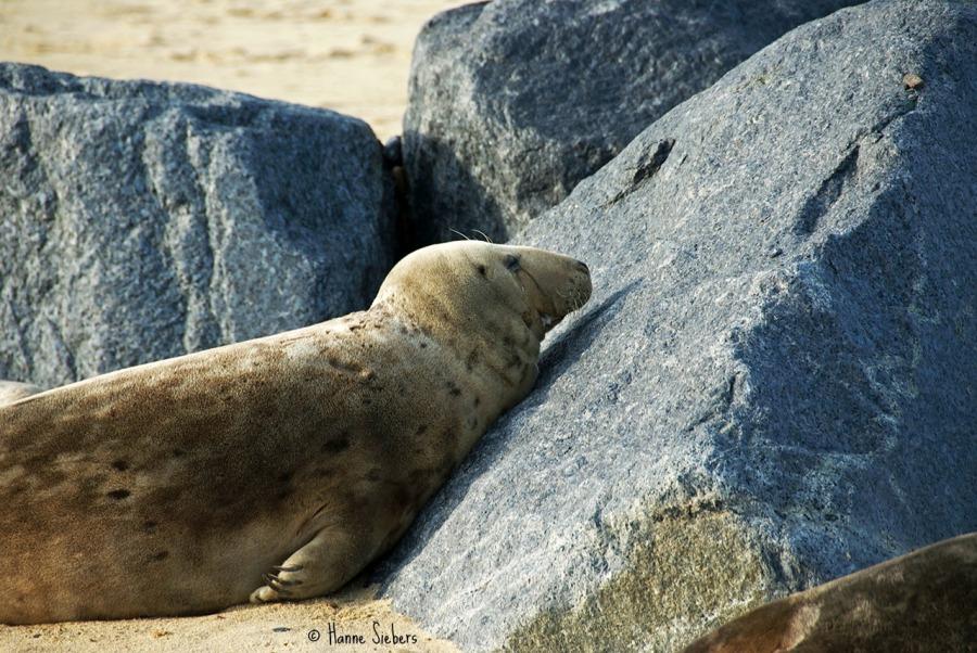 Seals33a