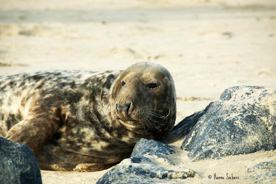 Seals35a