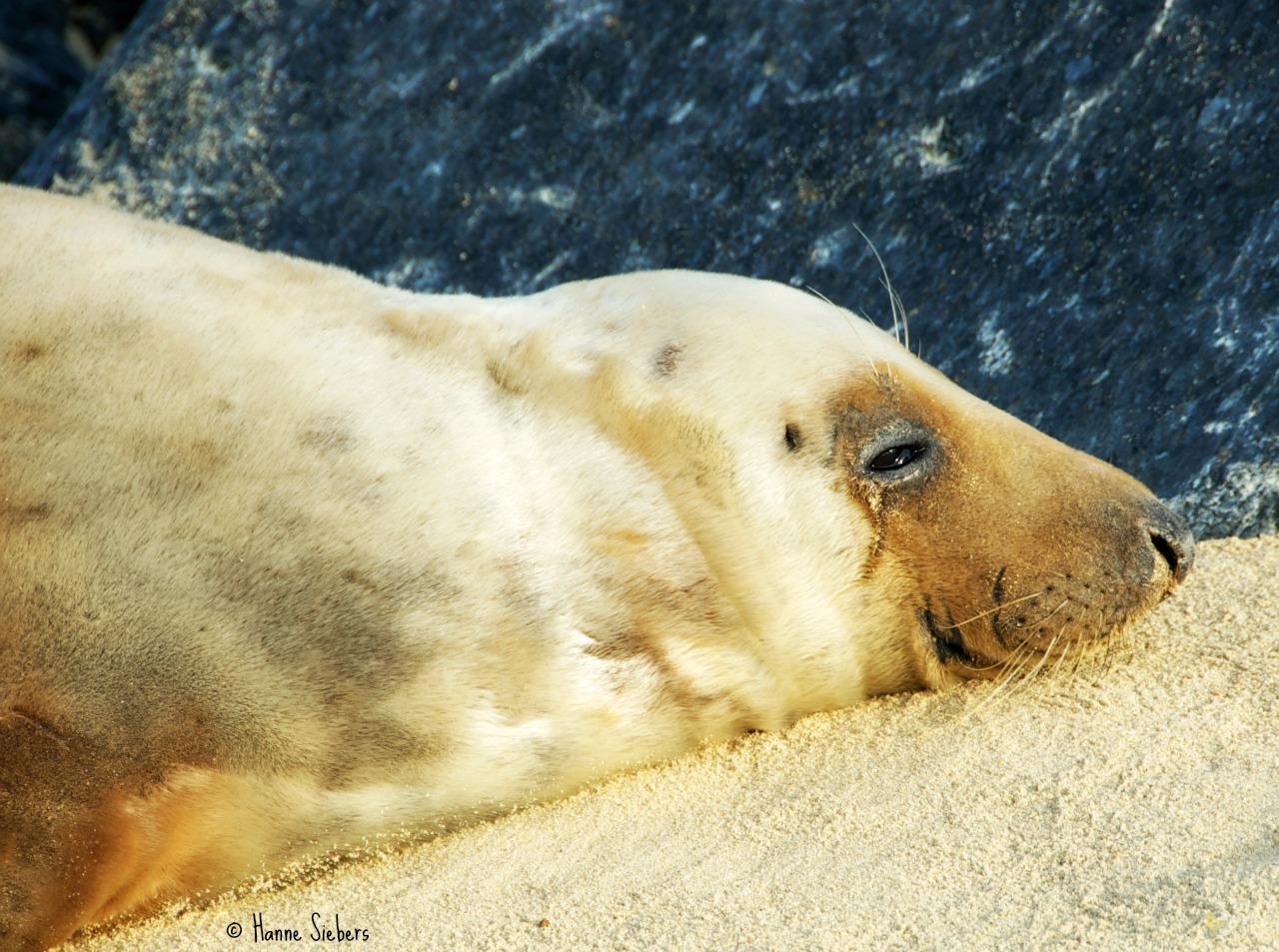 Seals37a