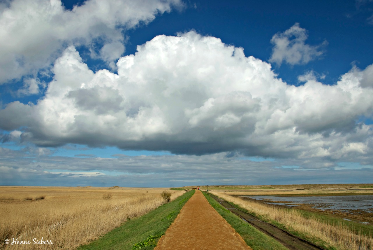 Cley_Marshes