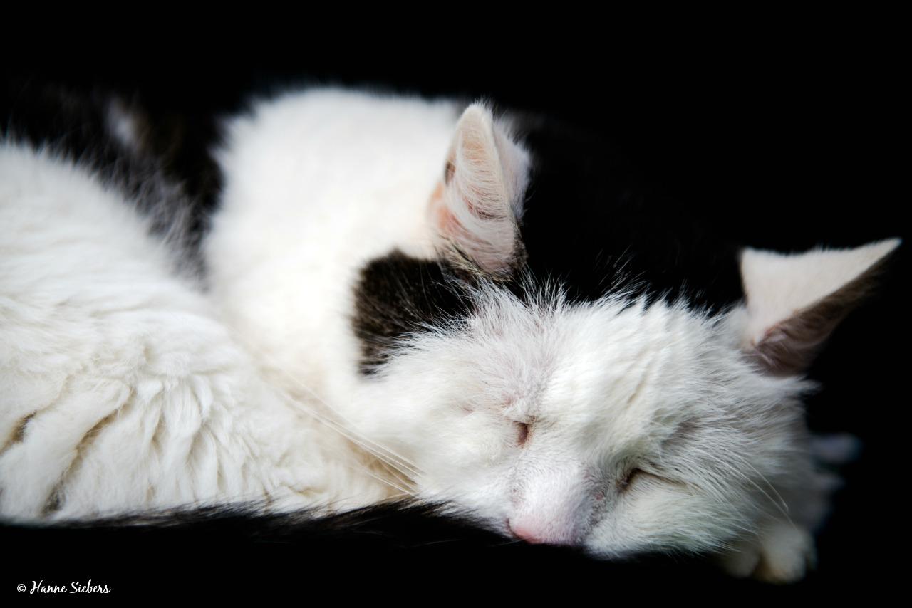 Katten06-0756_kl