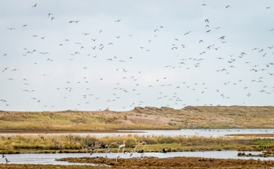 Cley reserve