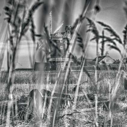 Reeds04_hannesiebers