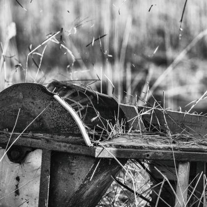 Reeds09_hannesiebers