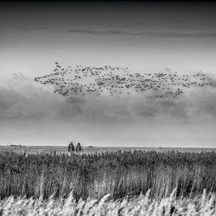Reeds14_hannesiebers